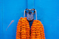 Inde, Bengale-Occidental, Kolkata, Calcutta, porte, cadenas et fleur // India, West Bengal, Kolkata, Calcutta, door, padlock and flower