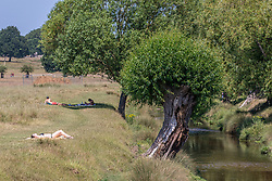 © Licensed to London News Pictures. 23/06/2020. London, UK. A sunbather in Richmond Park in South West London as forecasters predict a hot week ahead with temperatures expected to reach over 30c. Prime Minister, Boris Johnson announces that tourism and hospitality including pubs, restaurants and campsites can now reopen from the 4th of July as well as reducing the 2 metre rule to 1 metre.  Photo credit: Alex Lentati/LNP