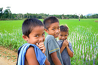 Young boys in a rice paddy, Bohol, Philippines