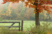 Fall foliage through the fog at Ramblin' Vewe Farm in Gilford on Monday morning.  (Karen Bobotas/for the Laconia Daily Sun)