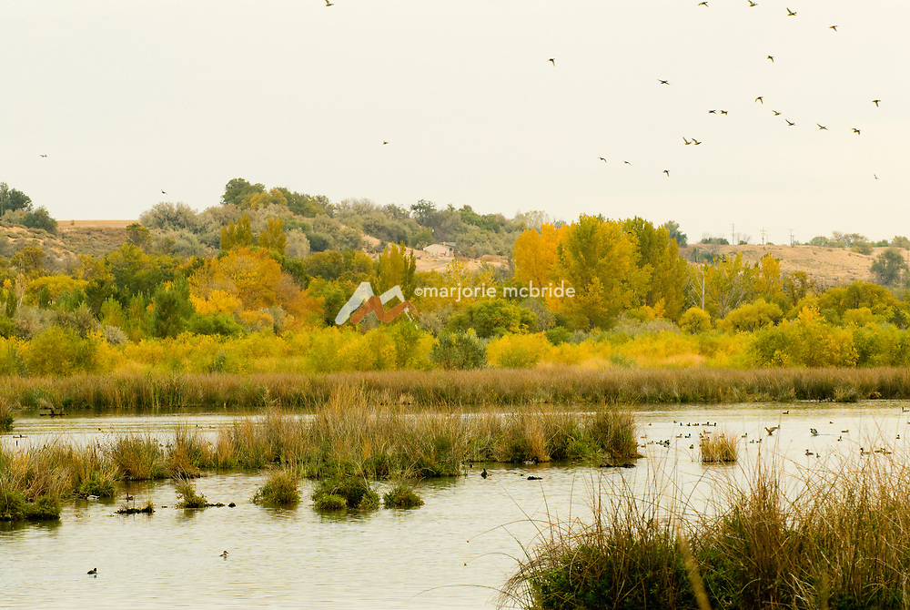 Hagerman Wildlife Management area with ducks during autumn.