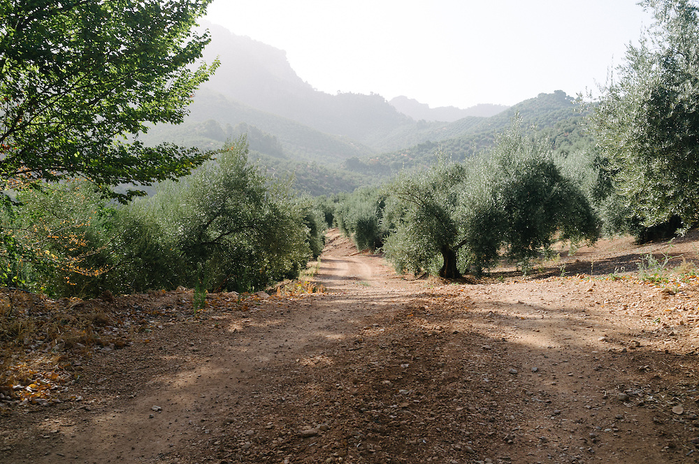 Olive farm in Jaen, Spain