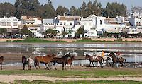 Horses in the marshes in front of the Village of El Rocio, Huelva, Spain