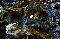 Abstract of intricately twisted driftwood.