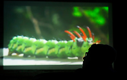 Patrons enjoy a tasty beverage while watching a presentation on insect life at the once-monthly Nerd Nite event, Monday, April 24, 2017, at Club 21 in the Uptown neighborhood of Oakland, Calif. (Photo by D. Ross Cameron)