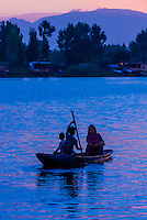Shikaras (boats) on Dal Lake at sunset in Srinagar, Kashmir, Jammu and Kashmir State, India.