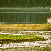 "This is the same place where I was charged by a brown bear catching salmon like this one. I was photographing it and suddenly it started charging towards me. I was still looking at it through the viewfinder until I realised that it was starting to fill the  screen, and that in fact it wasn't actually chasing fish anymore but charging me! I lowered my camera and my first instinct was to stand firm and tall, point at it in a commanding manner, and shout as loud as I could "" go back!"", which it duly obliged in doing. It screeched to a halt, snarled at me, and then swung around and ran away into the high grass, leaving me frozen to the spot with my heart in my mouth, my eyes and mouth wide-open and trembling from head to foot."
