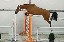 084, Hesdita<br /> Vrijspringen Nationale Merriekeuring, 3 jarige springmerries <br /> KWPN Paardendagen Ermelo 2015<br /> © Hippo Foto - Dirk Caremans