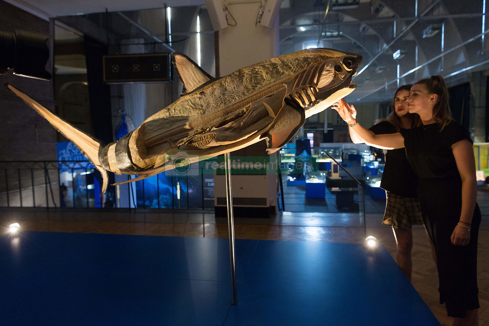 July 26, 2018 - London, London, United Kingdom - Two visitors view a full bodied shark showing as part of the Sea Creatures exhibition in London, United Kingdom, 26 July 2018. The painstakingly preserved displays use the same plastination process developed by Dr. Gunther von Hagens and made famous by artist Damien Hirst, replacing fluids and soluble fats with resins and allowing us to view incredibly accurate Ôcross-sectionsÃ• of the creatures. (Credit Image: © Ray Tang via ZUMA Wire)