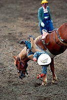 Calgary Exhibition and Stampe Rodeo, July 2000