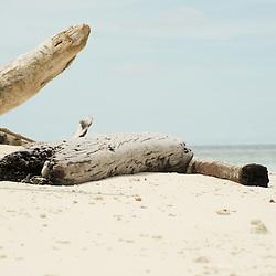 Driftwood on a white sandy beach.