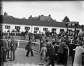 1955 - Goffs September Bloodstock sales at the RDS, Ballsbridge Dublin