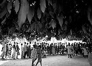 People waiting in line under a large mango tree at a vaccination site in the town of Yadè Bohou, north of Kara, northern Togo, on Tuesday Feb 13, 2007.