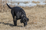 Riley in the wilds of North Dakota on Monday, Feb. 26, 2018.