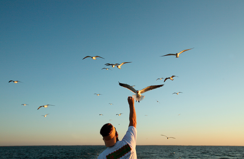 A man feeds seagulls following the Ocracoke Ferry Boat in North Carolina. Located at the southernmost tip of North Carolina's Outer Banks, Ocracoke Island is part of the Cape Hatteras National Seashore and has nearly 16 miles of undeveloped beaches. It is accessible only by ferry, private boat or plane.