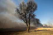 A lone tree amidst the smoke and anger of the fires. Qayyara, Iraq. Nov. 23, 2016. (Photo by Gabriel Romero ©2016)