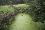 Dew pond suffering eutrophication