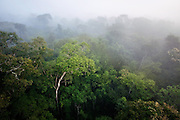 Rainforest in the morning mist. Cristalino State Park, Alta Floresta, Mato Grosso,  Brazil, March, 2009.