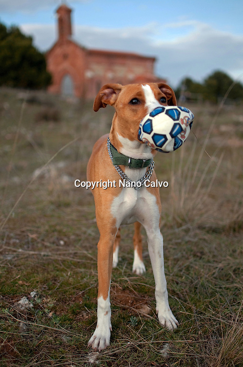 Cute dog with deflated ball in mouth