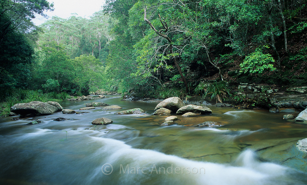 Small river flowing through a temperate rainforest in the Royal National Park, Australia