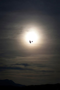 "A glider flies past the sun at Cap Bear, near Port Vendres, France. This mage can be licensed via Millennium Images. Contact me for more details, or email mail@milim.com For prints, contact me, or click ""add to cart"" to some standard print options."