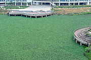 NANNING, CHINA - APRIL 14: (CHINA OUT) <br /> <br /> Water hyacinth grow in the lake at Guangxi University of Finance and Economics on April 14, 2016 in Nanning, Guangxi Zhuang Autonomous Region of China. The lake in Guangxi University of Finance and Economics was almost covered by the water hyacinth for the reason that pollution made the water eutrophicated.<br /> ©Exclusivepix Media
