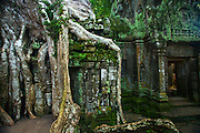 silk cotton tree, Ta Prohm, Angkor,Cambodia