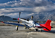 """Red Tail - Aluminum Art Print<br /> <br /> """"Bunny"""" the Red Tail P-51 Mustang in a dramatic photograph at the Palm Springs Air Museum. Dedicated to Tuskegee Airman Lt. Col. Robert Friend. Printed 13""""x19"""" by infusing dyes directly into specially coated aluminum sheets. """"Bunny"""" takes on a magical luminescence that will last forever. Float mount hangar included. <br /> <br /> The aircraft designed and duplicated of the P-51 Mustang flown by the Colonel in World War II. A crowd favorite at Air Shows and flown the last two years in the prestigious Reno Air Races. Colonel Robert J. (Bob) Friend (February 29, 1920 - June 21, 2019), a veteran of 142 combat missions, recently honored at his Memorial Service by a Missing Man Formation of F-16 fighter jets from the 187th Fighter Wing from the Alabama Air National Guard in a national event at the Palm Springs Air Museum.<br /> <br /> Photographed by Palm Springs Air Museum photographer Ian L. Sitren. A large scale version hanging the office of the Executive Director of the Air Museum. A porion of the sales proceeds to benefit the Palm Springs Air Museum (a non-profit organization). <br /> <br /> Shipping to be best method direct from the professional photo lab facility. Production time approximately 7 - 10 days."""
