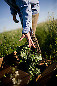 Northern California Local Farms/Food
