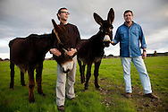 Miguel Carvalho and Filipe Carvalho, founders of the milking company.<br /> It is said that Cleopatra always took her bath in donkey milk to keep her beauty eternal. Far beyond the aesthetic benefits, the donkey milk is in the animal world the closest to the human maternal milk and was used as it&acute;s substitute until the twentieth century. More recent findings indicate that the donkey milk can also be consumed by children allergic to cow's milk.<br /> Despite all this, the great utility of the donkey had always been their mobility and strength, with the mechanization of agriculture and the development of transportation, the donkey began to be used less and less. In Portugal, in the twentieth century, a very partircular kind of donkey came in the process of extinction, the race of Miranda.<br /> Four years ago two businessmen in Portugal decided to merge these two factors and create Naturasin, a company dedicated to preserving the kind of Miranda by producing she donkey milk and selling it to the cosmetic industry.<br /> The small farm in Couco a village 100 km from Lisbon is this days selling milk to countries as far away as South Korea, it has 50 she donkeys and in 2011 were born in the farm 17 copies of the endangered species. In Portugal. 20/01/2012 NO SALES IN PORTUGAL
