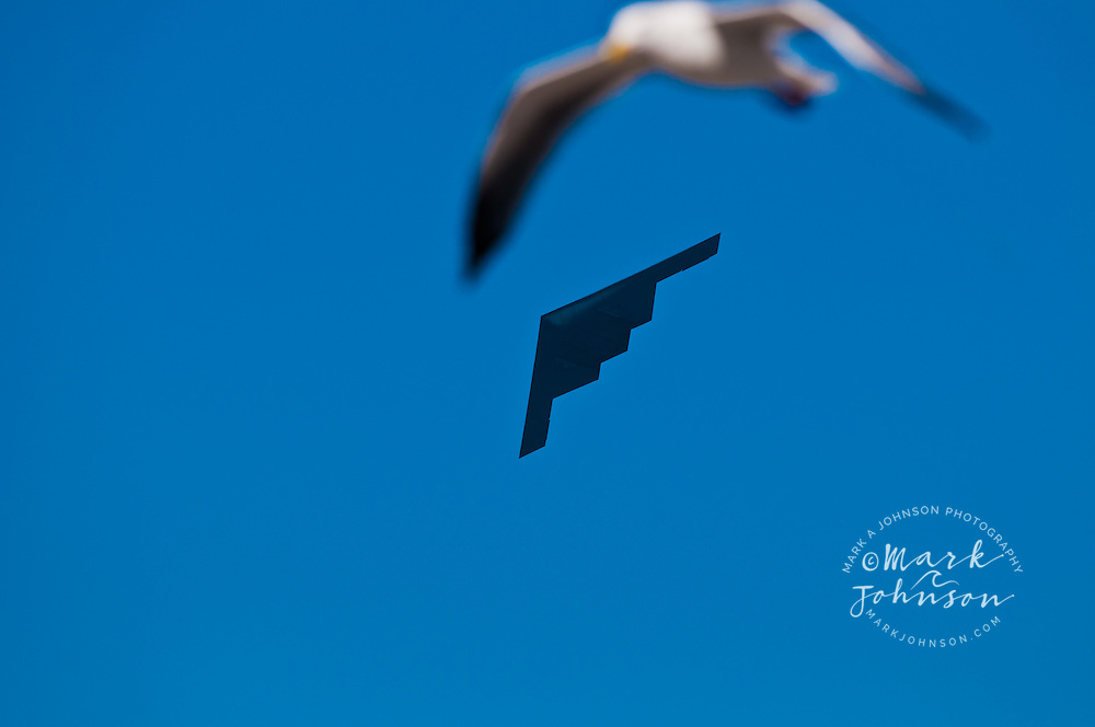 B2 stealth bomber & seagull, Fleet Week Air Show, San Francisco, California, USA