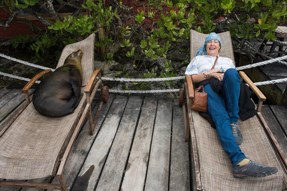 Galapagos Sealion (Zalophus wollebaeki)<br /> Red Mangrove Inn<br /> Puerto Ayora, Santa Cruz Island<br /> GALAPAGOS ISLANDS<br /> ECUADOR.  South America
