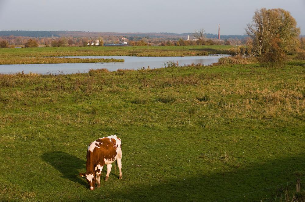 Nederland, Omgeving Kesteren, 7 nov  2008.Langs de Nederrijn tussen Maurik en Kesteren. Uiterwaardenlandschap. ..Foto (c) Michiel Wijnbergh