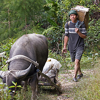 A local man and his water buffalo we met on the way to Pa'Lungan.