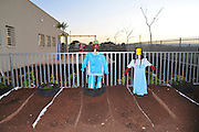 Israel, North District, Jezreel Valley, Afula, Home made scarecrows in a vegetable garden