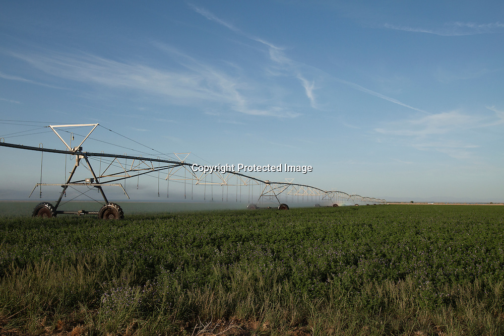 An automated sprinkler system watering an alfafa field located in the Imperial Valey, California