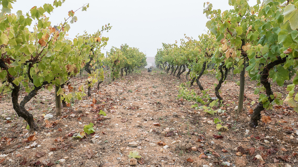 Making wine is a family and neighborhood afair in Central Portugal.