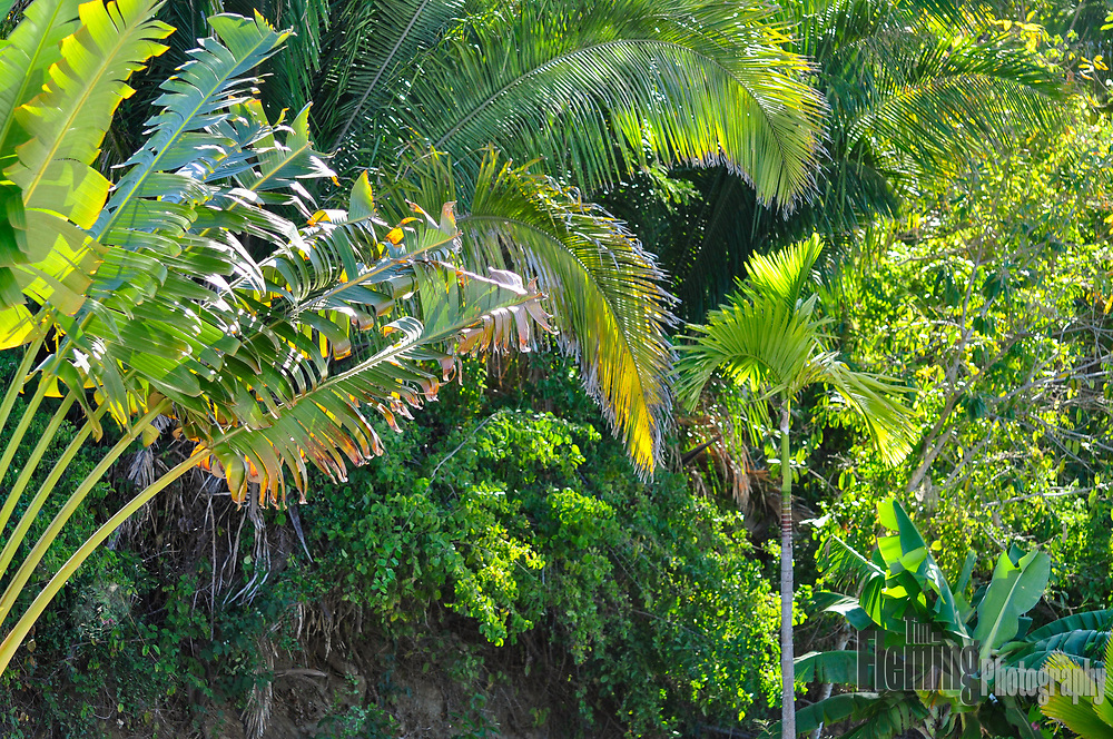 Palm tree and other plants in a lovely Mexican garden