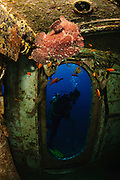 Israel, Eilat, Red Sea, - Underwater photograph of a diver swimming near a sunken boat. A Frogfishes, (family Antennariidae) in the foreground. The ship was sunk by the Israeli Navy to induce coral reef growth