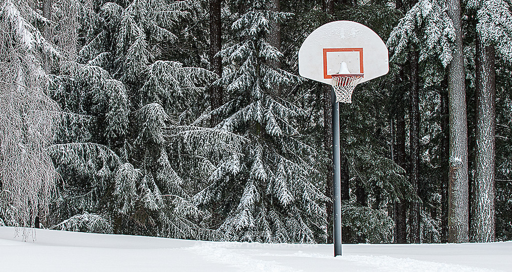 Basketball Hoop in snow, Mt Tabor Park. Photo 12/22/2008.  Sitka Spruce (Picea sitchensis) and Douglas fir (Pseudotsuga menziesii)
