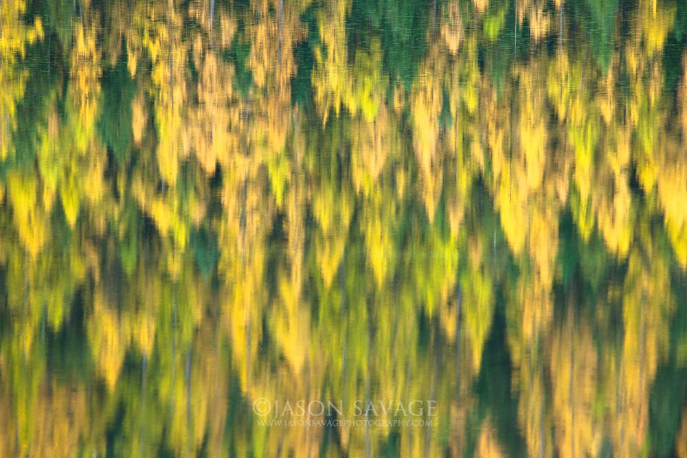 Tamarack Reflections, Salmon Lake, Montana.