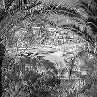 Catalina Island Avalon city through palm trees black and white photo. Picture includes the Green Pleasure Pier and downtown Avalon waterfront businesses.  Catalina Island is a popular travel destination off the coast of Southern California in the United States.