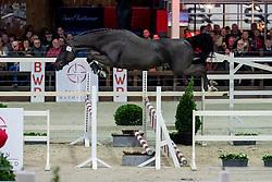 017, Ryder Van De Saffraanberg<br /> BWP Hengstenkeuring -  Lier 2020<br /> © Hippo Foto - Dirk Caremans<br />  17/01/2020