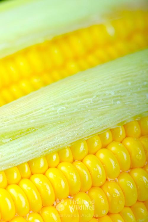 Succulent yellow kernels of corn on the cob