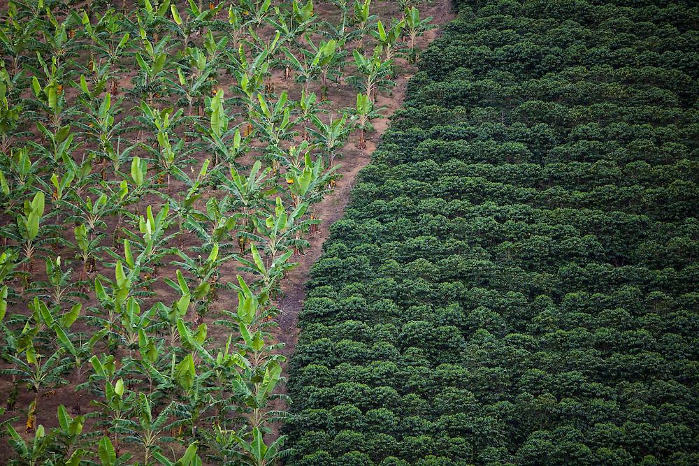 Domingos Martins_ES, Brasil...Lavouras de cafe e banana em Domingos Martins...Coffee and banana agriculture in Domingos Martins...Foto: LEO DRUMOND / NITRO