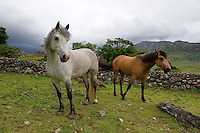 Connemara ponies in Connemara. Photo:Andrew Downes