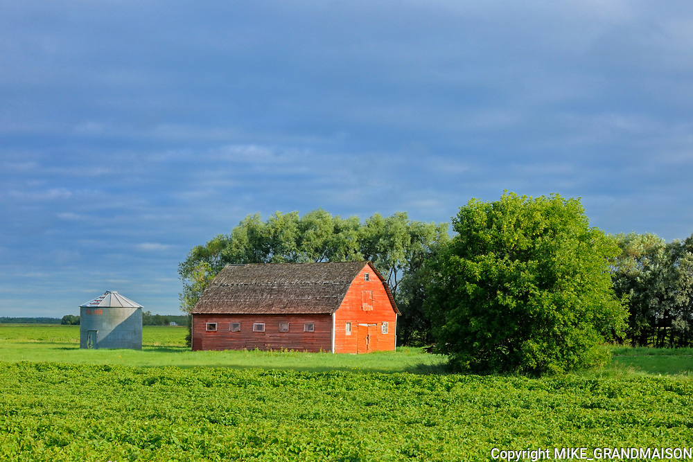 Red barn and soybeans<br />