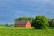 Red barn and soybeans<br />Oakbank<br />Manitoba<br />Canada