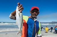 Elf caught in a trek net haul, Strandfontein, False Bay, Western Cape, South Africa