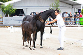 Borculo CDI Foal Auction